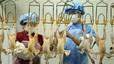 La nueva mutación del virus de la gripe aviar H7N9 podría resistir los antivirales