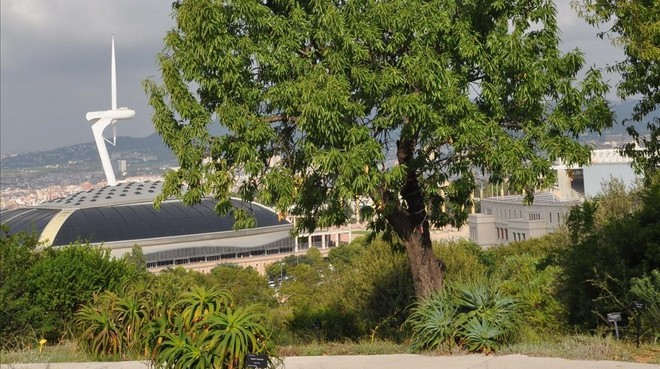 Almendros del jard n bot nico de barcelona for Arboles del jardin botanico