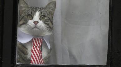 El gato de Julian Assange sentado en la ventana de la embajada de Ecuadoren Londres.