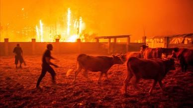 Puja a 31 el nombre de morts pels incendis a Portugal