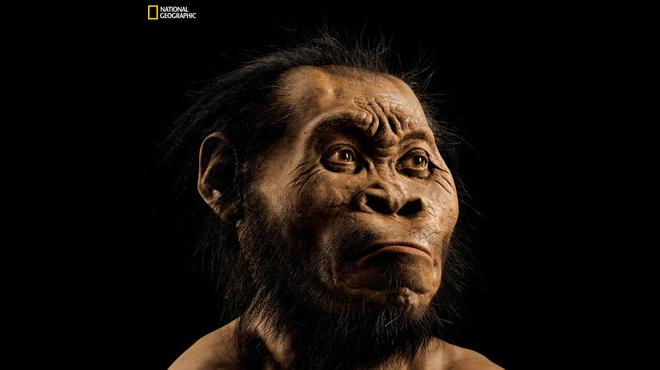 'Homo naledi'