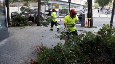Los servicios de limpieza de Badalona retiran �rboles ca�dos por el temporal.