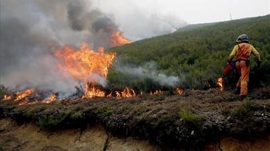 Osos al borde de las llamas