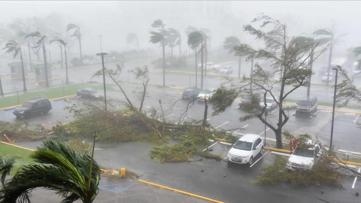 Árboles caídos por los vientos huracanados en un párking exterior de San Juan (Puerto Rico), el 20 de septiembre.