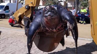 Una tortuga laúd de más de 200 kilos aparece muerta en una playa de Calella