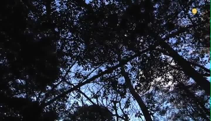 39 cuarto milenio 39 se adentra en 39 el bosque de los suicidas 39 for Cuarto milenio cuatro directo