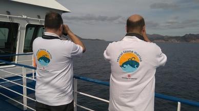 Aumenta la presencia de cetáceos entre Catalunya y Baleares