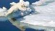 Un Oso polar, Ursus maritimus, salta de una pieza de hielo a otra.