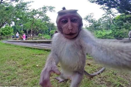 El autorretrato del macaco que robó la cámara de unos turistas.