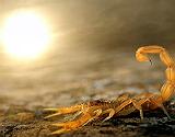 'Alacr�n al sol'.