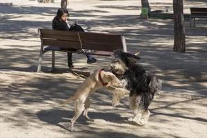 Dos perros sueltos juegan en el parque de Joan Miró de Barcelona