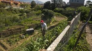 Juan trabaja los cultivos de su parcela en los huertos comunitarios de Can Pinyol.