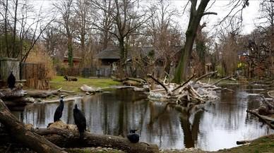 El zoo de Viena sacrifica a todos sus pelícanos por un brote de gripe aviar