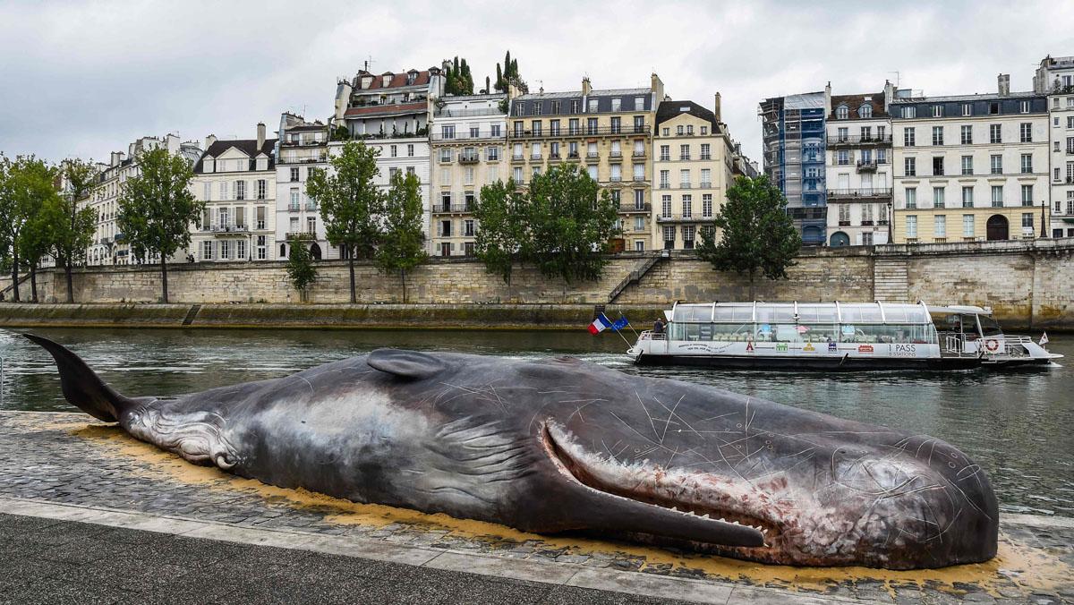 Una ballena 'aparece' en París, a orillas del Sena