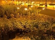 Plantación de marihuana de la Zona Franca de Barcelona hallada por los Mossos d'Esquadra.