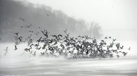 Una bandada de pájaros sobre la bahía de Irondequoit.
