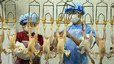 La nova mutació del virus de la grip aviària H7N9 podria resistir els antivirals