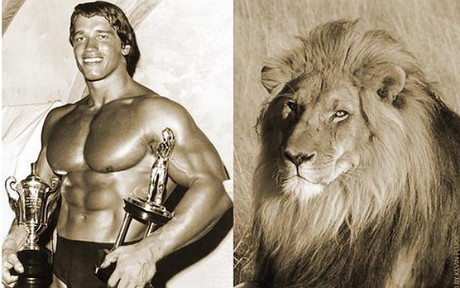 #5forBigCats, la campa�a de Arnold Schwarzenegger contra la caza de animales como Cecil.
