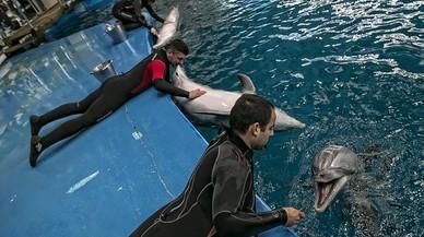 Colau elige al biólogo Sito Alarcón para pilotar el futuro Zoo de Barcelona
