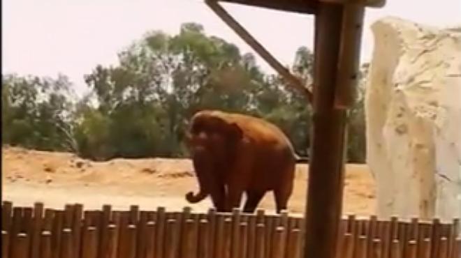 Un elefante del zoo de Rabat ha matado a una ni�a de una pedrada.