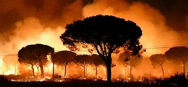 Un incendio alcanza el parque natural de Doñana