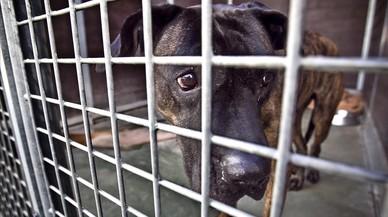 Los Mossos hallan dos perreras ilegales y varias fincas con animales en malas condiciones