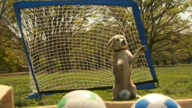 El perro portero bate el récord de paradas