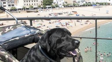 Una família de Tossa recull firmes perquè el seu gos malalt es pugui banyar al mar