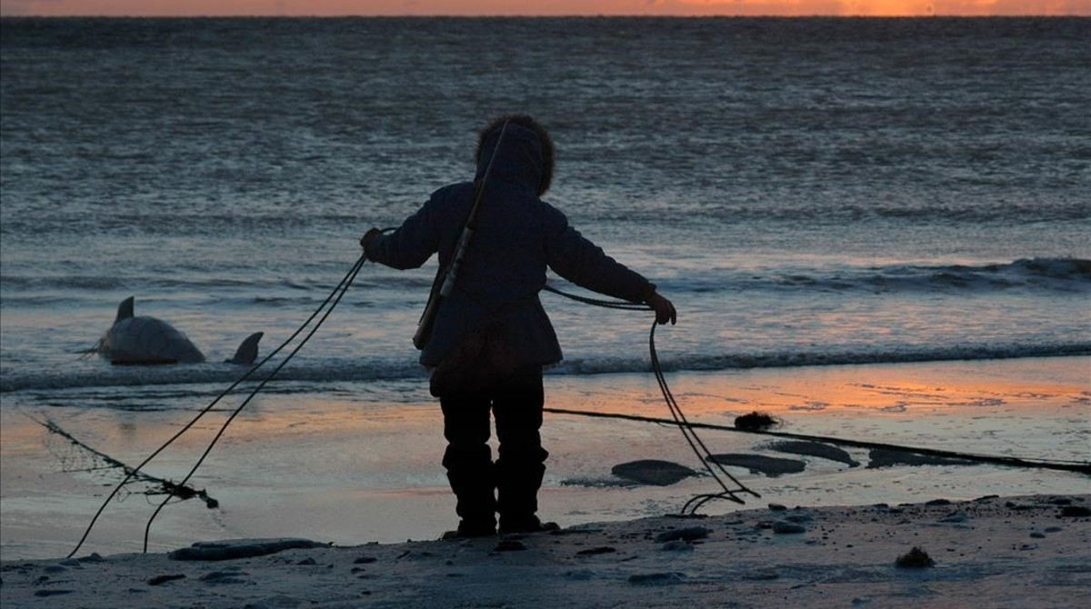 amadridejos3658156 karlin itchoak coils the rope of a subsistence net after pul180112191606