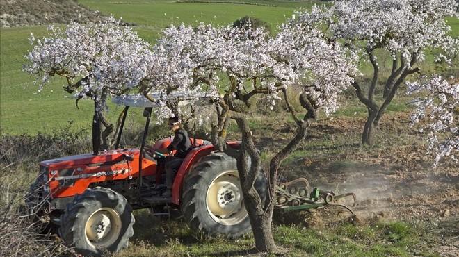 Campo con los almedros florecidos en Sant Mart� de Tous, en la comarca del Anoia. Las elevadas temperaturas han coincidido con una acusadasequ�a.