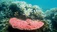 Alerta per la mort de la Gran Barrera de Coral australiana