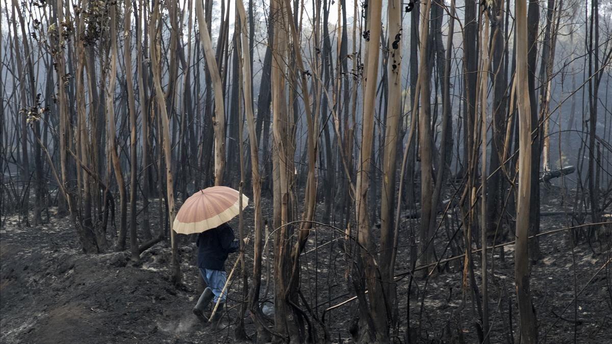 zentauroepp40564314 a villager checks a burnt area under the rain in soutomaior 171017142732