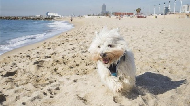 La nova platja per a gossos enfronta veïns de Sant Martí i animalistes