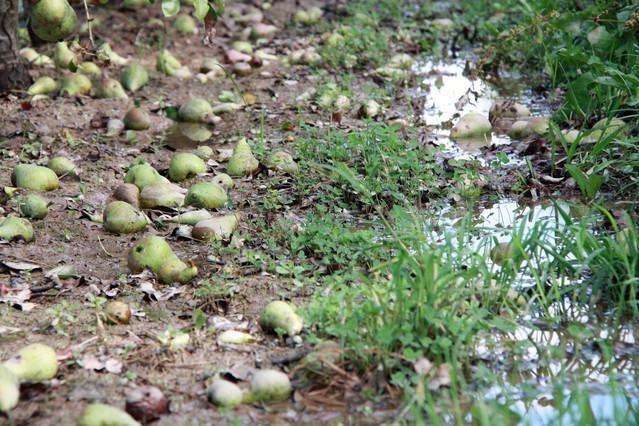 Resultado de imagen para granizo en cultivos