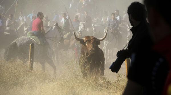 El Toro de la Vega, tradició o barbàrie
