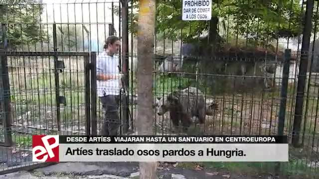 Els dos óssos d'Arties abandonen el captiveri per viatjar a un santuari d'Hongria