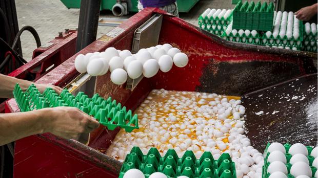 L'escàndol dels ous contaminats ja afecta set països