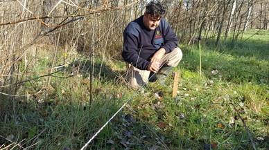 Un técnico de la empresa Soma impregna de feromonas de lobo, con una esponja, una de las estacas del vallado para ahuyentar a los jabalís.