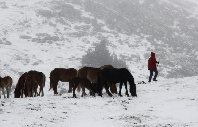 Una manada de caballos, en el puerto de la Bonaigua. Marta Lluvich | ACN