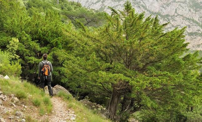 amadridejos32187060 bosque de tejo tejeda de cosp en rasquera joto151218162946