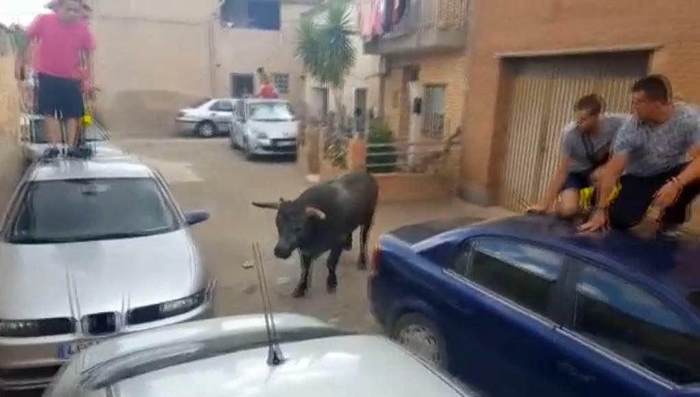 Un toro sescapa durant un encierro a Alfamén (Saragossa) i fereix una nena