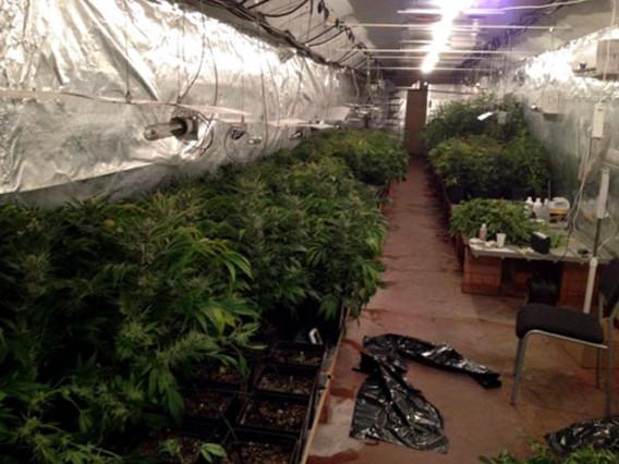 Localizado un local en Mataró con 500 plantas de marihuana