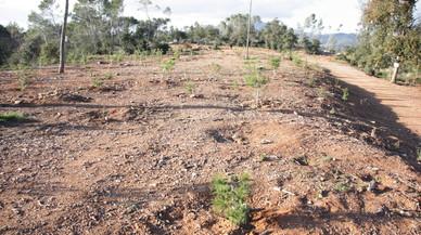 El Bosque de Can Deu dos años después del vendaval.