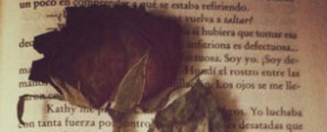 La rosa y el libro