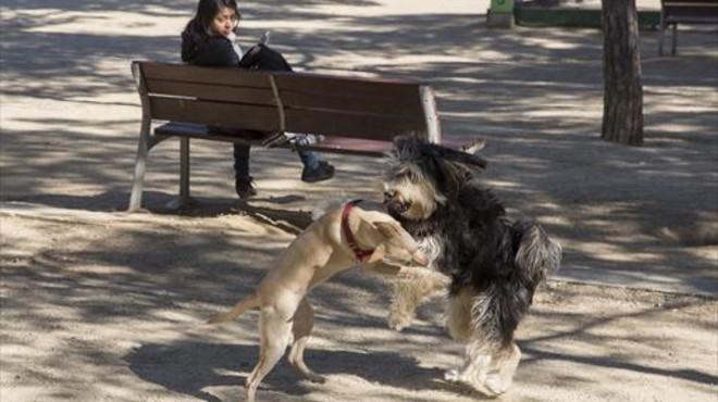 Multados por el ADN cuatro dueños de perros por dejar los excrementos en la calle
