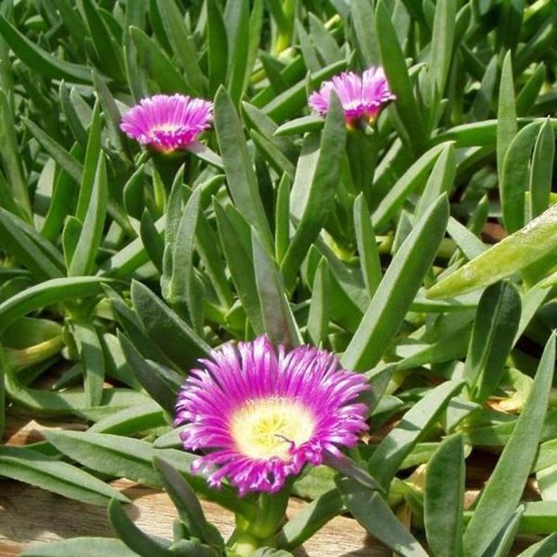 Un catálogo de plantas invasoras en España