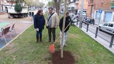 Gavà posa en marxa una nova campanya de plantació d'arbrat urbà
