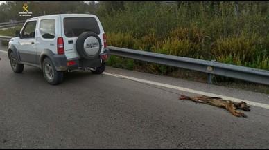 Investigado por la muerte de un cachorro al arrastrarlo con su coche durante varios kilómetros