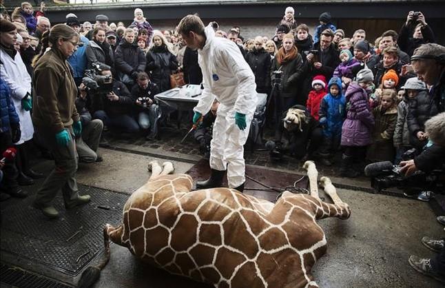 El zoo enoja a los animalistas por el sacrificio de un ant�lope sano reci�n nacido