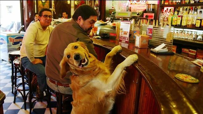 Gossos al restaurant